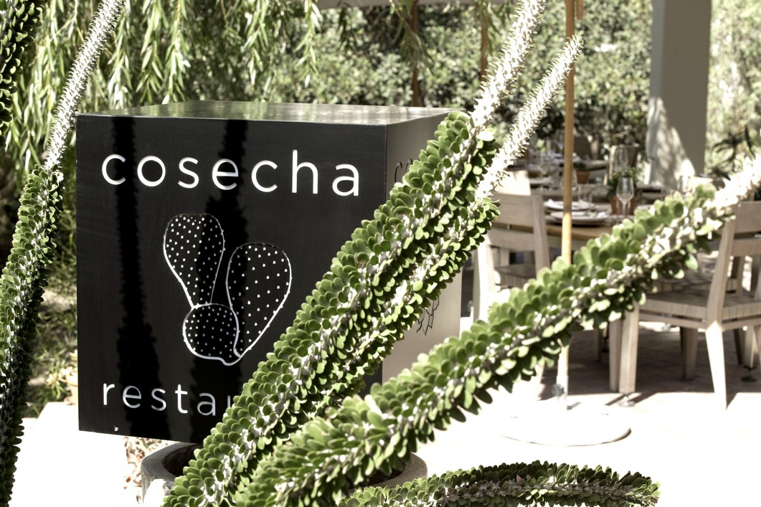 H|H Cosecha- Noble Hill HOSPITALITY HEDONIST -SOUTH AFRICAN TRAVEL | FASHION | LIFESTYLE 5