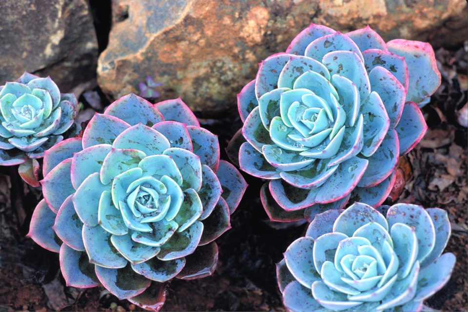 start-a-desert-garden-with-succulent-daily-easy-inspiration-for-backyard-project-9