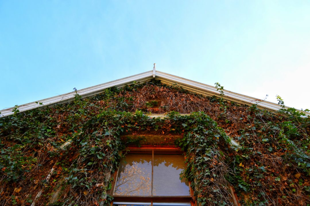 DSC 0111 01 1080x718 - Autumn's Food Journey Hartford House-KwaZulu Natal