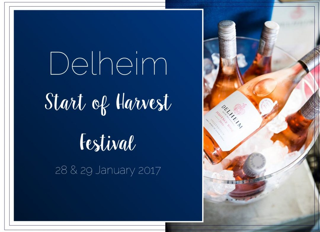 Delheim Start of Harvest Festival HOSPITALITY HEDONIST -SOUTH AFRICAN TRAVEL | FASHION | LIFESTYLE 7
