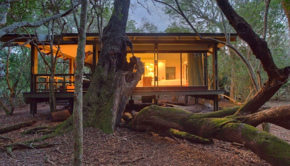forest8 960x550 - 4 South African Hotels you MUST visit in 2017