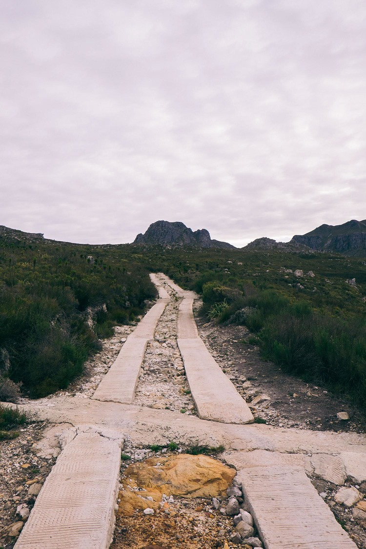 CapeCanopyToursElginzipliningcapetown 2 - 10 things I learnt 1000 metres above sea level