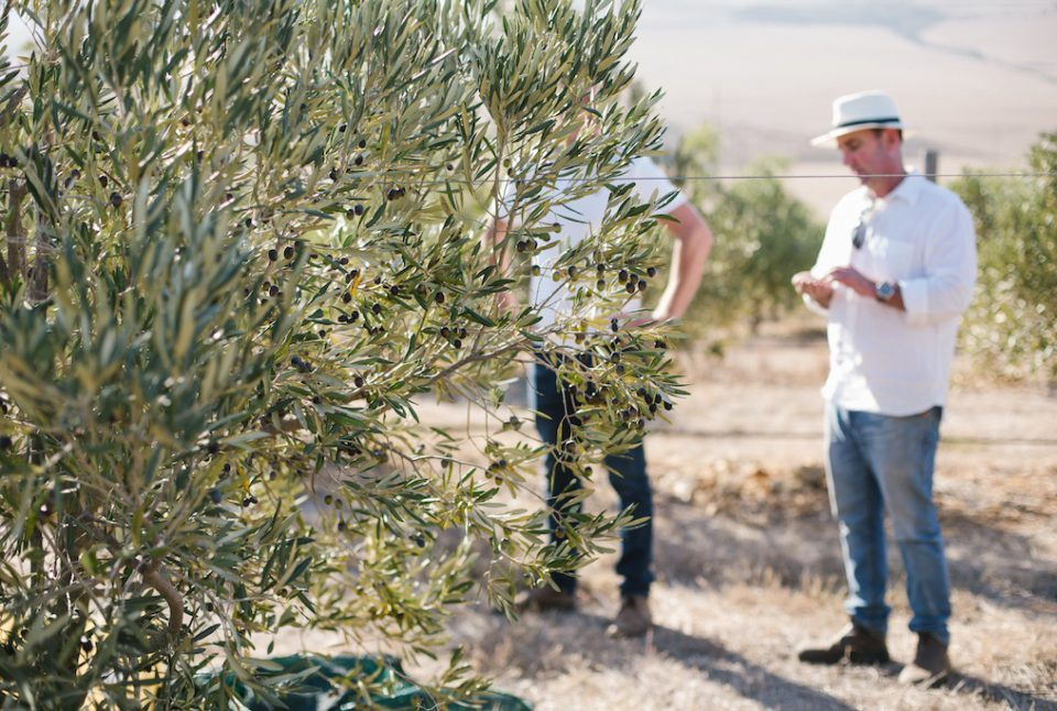 GK OliveHarvest 42 960x646 1 960x646 - Garbielskloof: Mediterranean Inspired