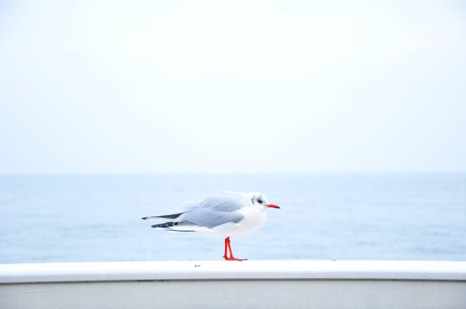 sea bird ocean animal 960x638 - My Favorite Finds this Summer & MCC Giveaway