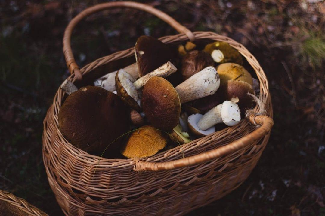 HOSPITALITY HEDONIST -SOUTH AFRICAN TRAVEL | FASHION | LIFESTYLE Delheim's popular Fungi Forage | 15, 16, 30 June 2017 image 4