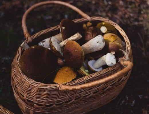 HOSPITALITY HEDONIST -SOUTH AFRICAN TRAVEL | FASHION | LIFESTYLE Delheim's popular Fungi Forage | 15, 16, 30 June 2017 image 4
